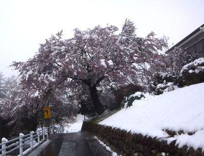 100417yukitosakura